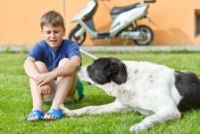 Child & dog