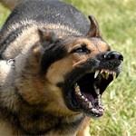 aggressive dog bite attack