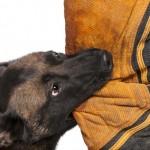 Dog Bite Socialization