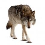 Dog Bite Fatality Alaska