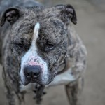 Animal behavior perspective on fatal dog attack in Texas