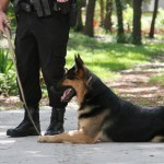 Police dog with handler