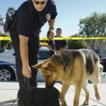 Police dog bites bystander at Mississippi State football game