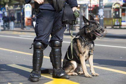 police dog bite expert