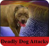 Olympia WA fatal dog attack by pack of pit bulls on 92 y.o. lady