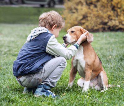 Dog bite expert children
